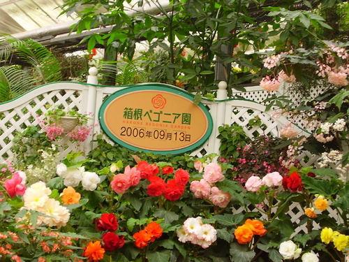 箱根ベゴニア園
