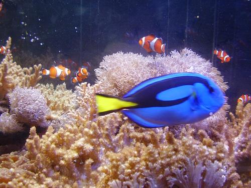 青と珊瑚礁