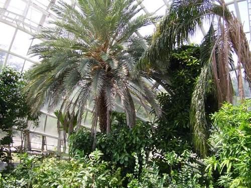 トロピカル温室